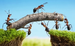 Team Building Ants0